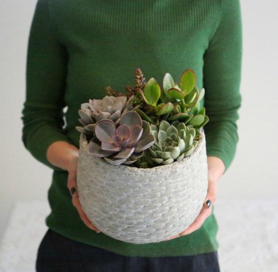 christmas box plant ideas